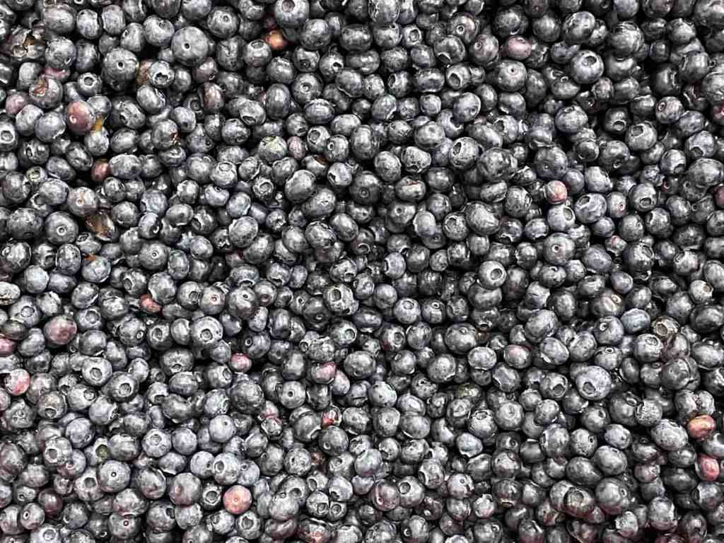 Large bin of fresh blueberries
